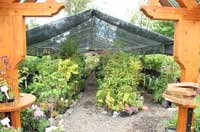 Fox Hollow Creek Nursery Tree Sales Plant Sales And