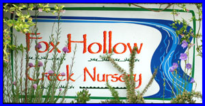 FOX HOLLOW CREEK NURSERY (541)345-4084 EUGENE NURSERY AND MORE. AT THE CORNER OF 28TH & FRIENDLY STREET IN EUGENE OREGON